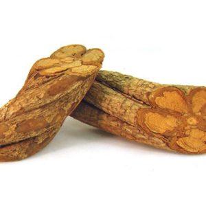 Buy Banisteriopsis Caapi Yellow Online