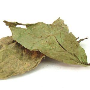 Buy Psychotria Viridis Chacruna Online